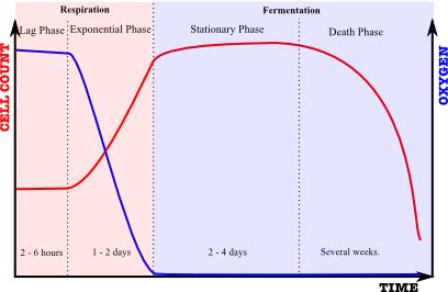 Vinski kvasac dijagram razvoja