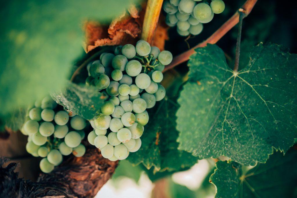 bentonit za bistrenje vina grožđe