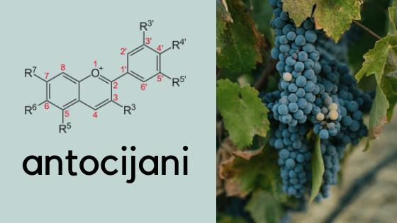 Antocijani su bitan faktor za proizvdnju belog vina od crnog grožđa