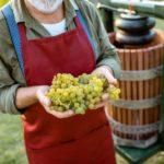 Proizvodnja belog vina – 9 jednostavnih koraka