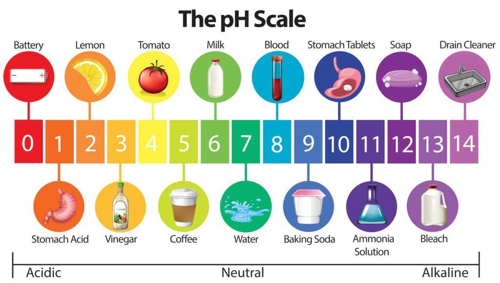 pH vrednost vina i namirnica