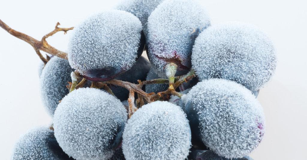 Grožđe za ledeno vino