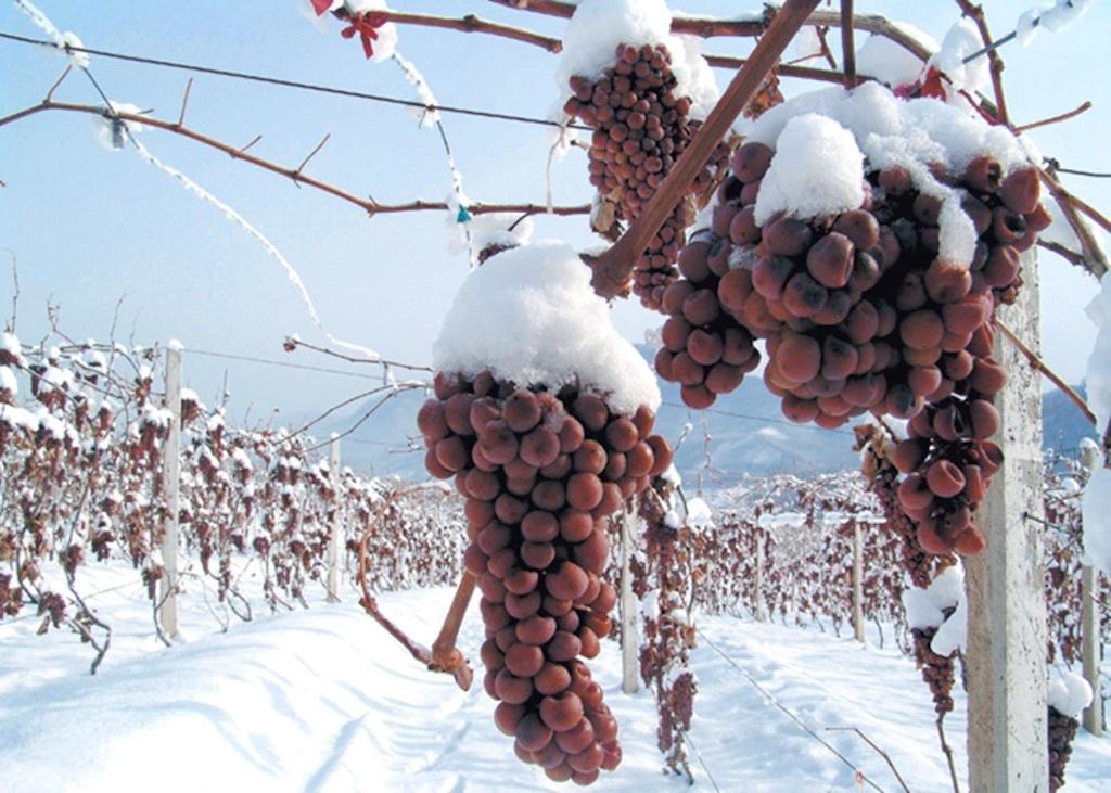ledeno vino ima dugu istoriju