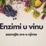 Enzimi u vinu – saznajte sve o njima