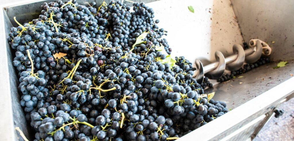 Muljanje grožđa