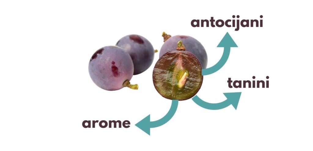 maceracija - sastav pokožice grožđa